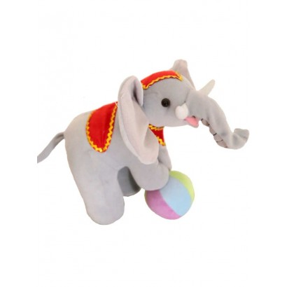 Elephant of the circus